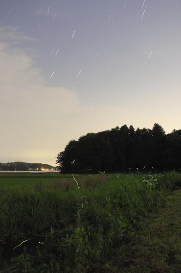 夜空の星と地上の星 2008年6月16日 城里町某所にて