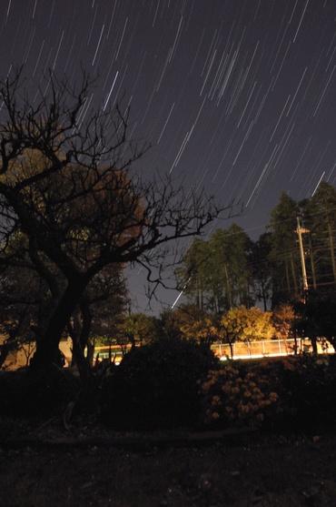 木々の間に昇るアークトゥルス
