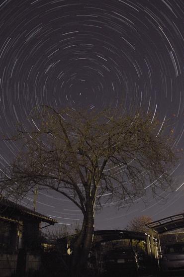 枯れ木を巡る北の星々 2008年11月20日 自宅にて