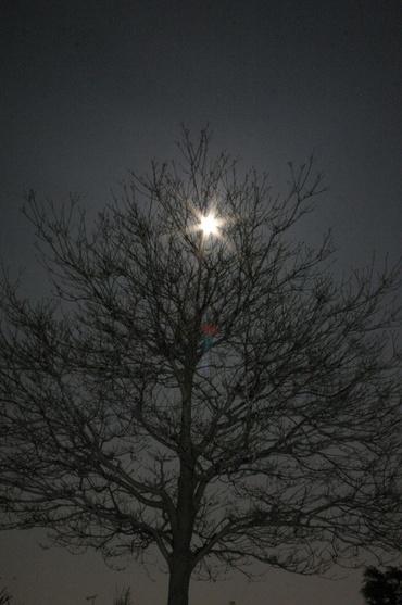 木の向こうの月