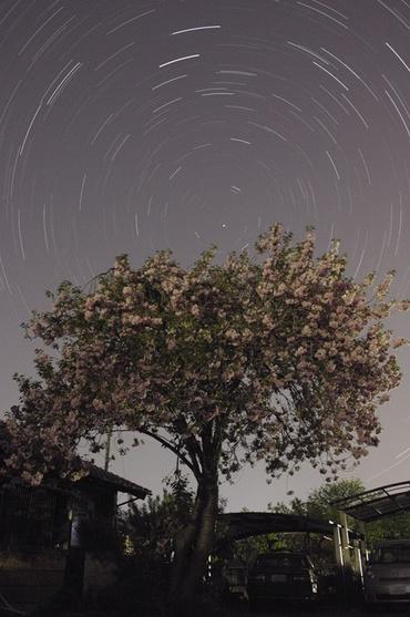 満開の木の上を巡る北の星々 2009年4月29日 自宅にて