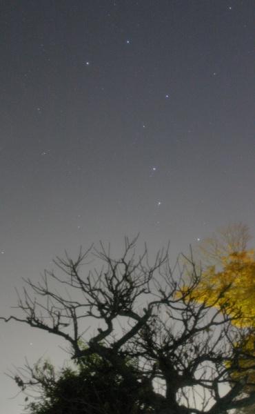 木立の上に立つ北斗七星